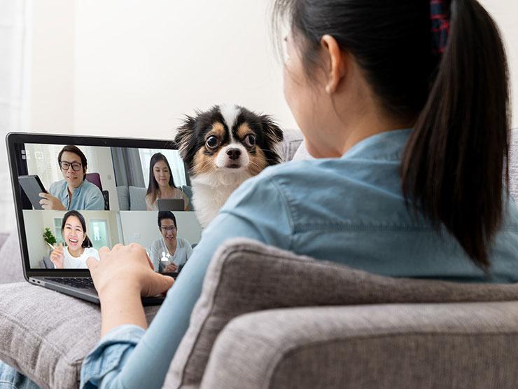 Réunion virtuelle interrompue par un chien.
